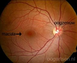 binnenbekleding oog (netvlies)