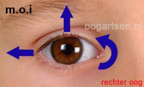 functie onderste schuine oogspier