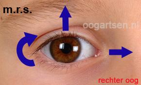 functie bovenste rechte oogspier