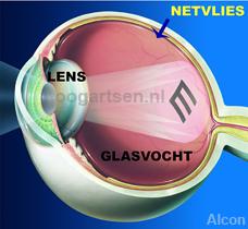 binnenzijde van het oog