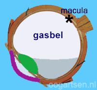 maculagat, leeshouding