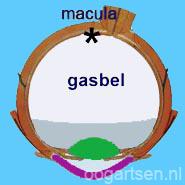 maculagat, treurhouding